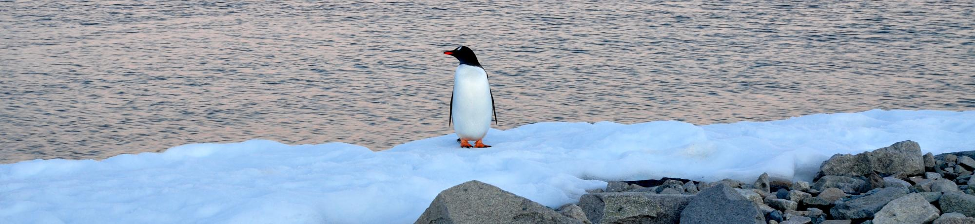 UC Davis Study Abroad, Seminar Abroad Antarctica, Antarctica as a Living System Program, Header Image, On Site Page