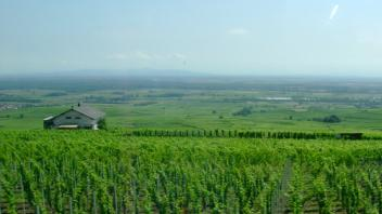 UC Davis Study Abroad, Summer Abroad France_Wine Program, Photo Album, Image 6