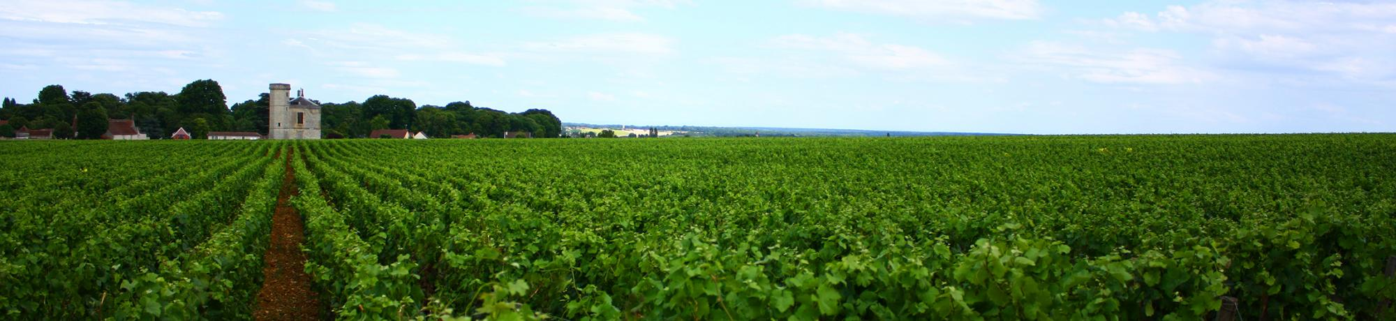 UC Davis Study Abroad, France, Introduction to Winemaking, Header Image, Onsite Page