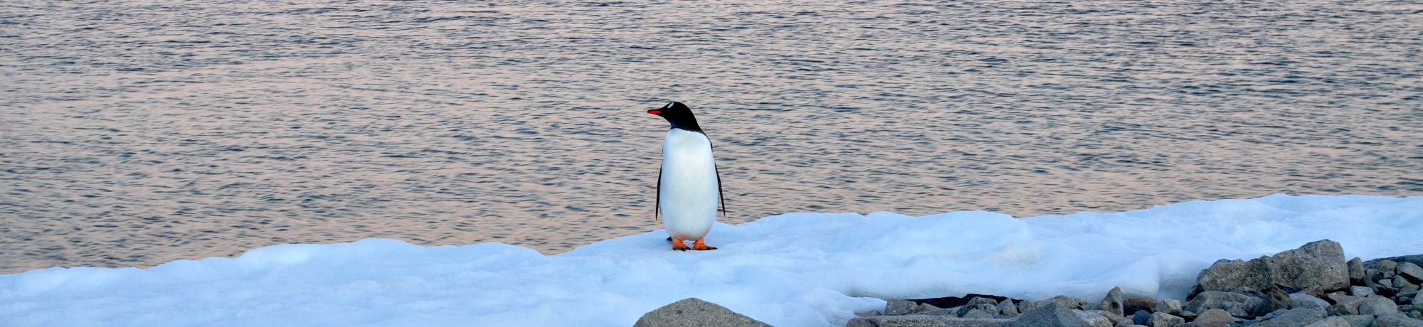 UC Davis Study Abroad, Seminars Abroad Antarctica, Ecology Program, Header Image, On Site Page